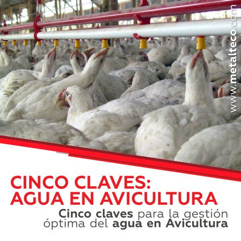 gestion del agua en avicultura